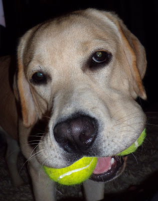 Talented cooper with two tennis balls