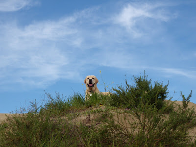 Blue sky cooper at Runyon Canyon