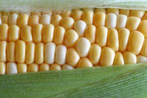 [corn]