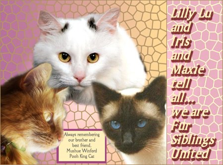 Lilly Lu Iris, Callie Rose , Maxie and Mikey Tell all.