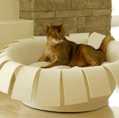 unusual Cat Bed crown