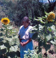 Mexique: le tournesol cultivé plus tôt qu'on ne le croyait