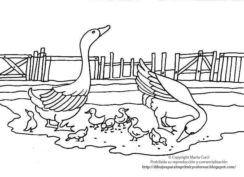Gallos Coloridos Dibujos Animados: DIBUJOS PARA COLOREAR: Dibujos De Patos Para Imprimir Y