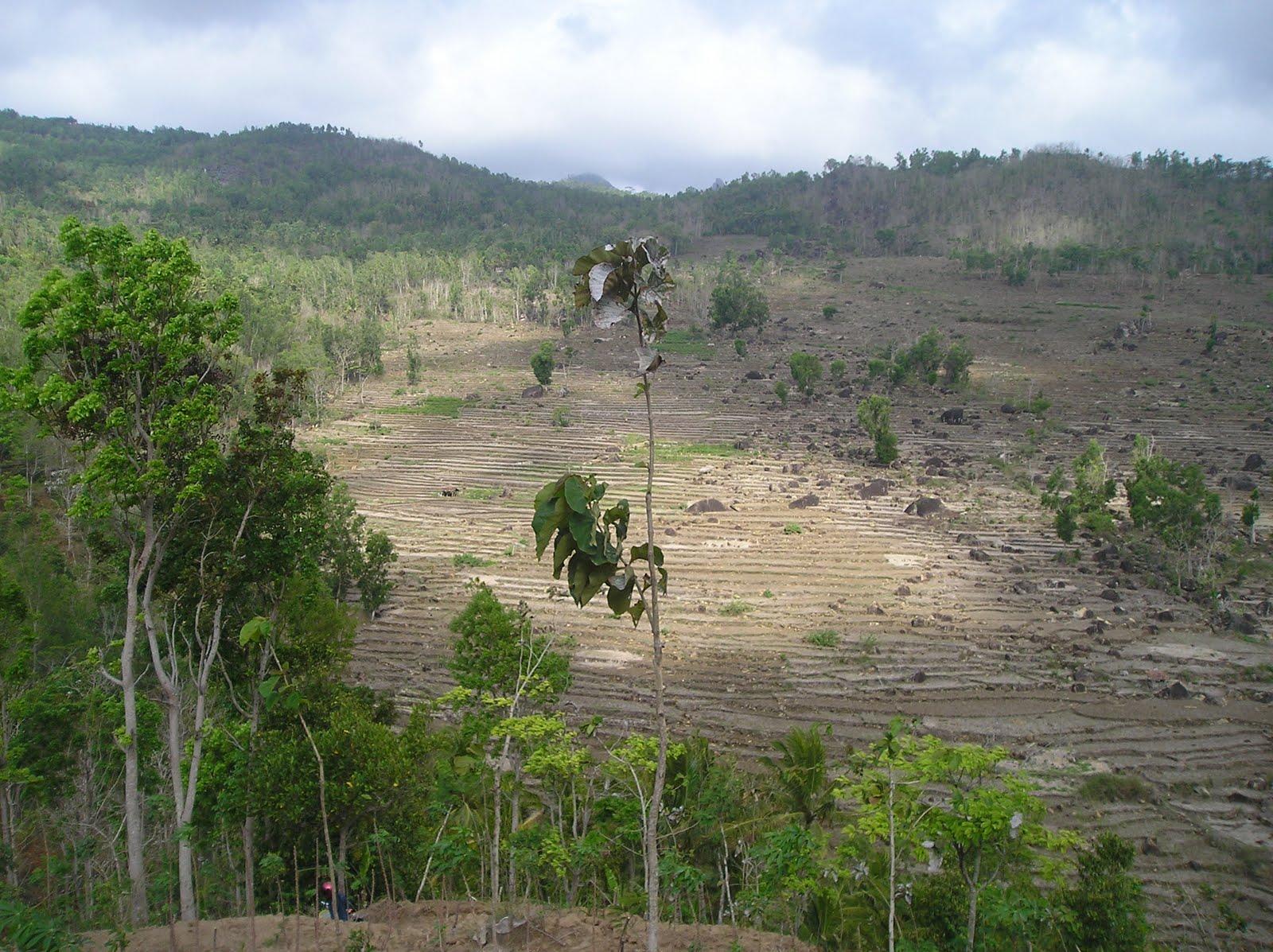 DESA KERTAHAYU: Hutan Gegerbentang habis jadi ladang