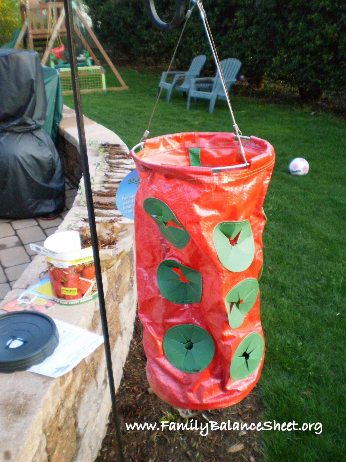 Topsy Turvy Strawberries An Experiment Family Balance Sheet