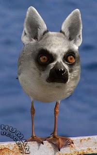 Phillygirl Crazy Animal Site: Crazy Looking Birds