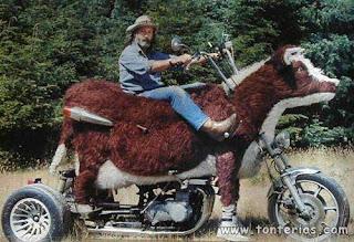 moto becerro, foto estupida