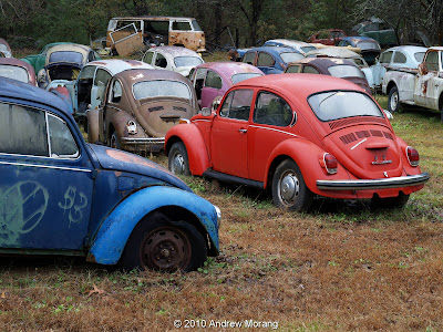 Volkswagen Beetles