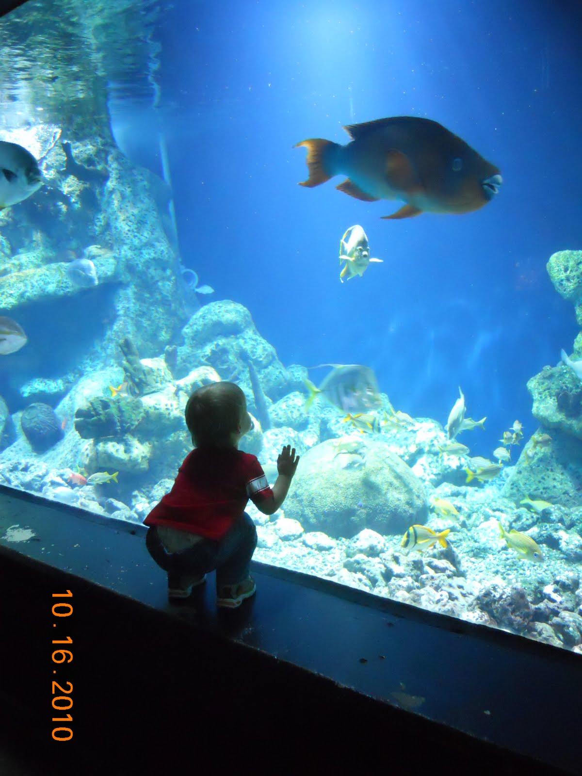 Adventures with the Nickelson's: Tulsa Aquarium