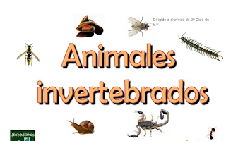 Resultado de imagen de los invertebrados dibujo