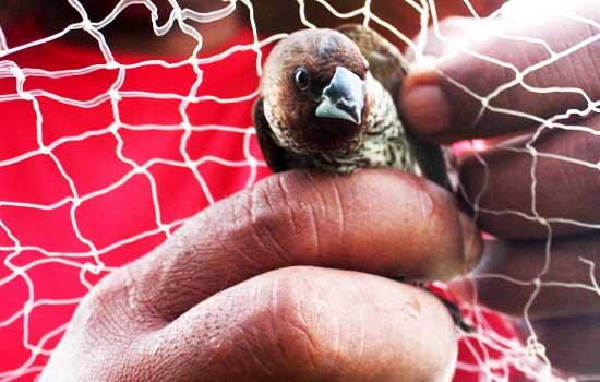 Mimpi menangkap burung dengan tangan sendiri togel