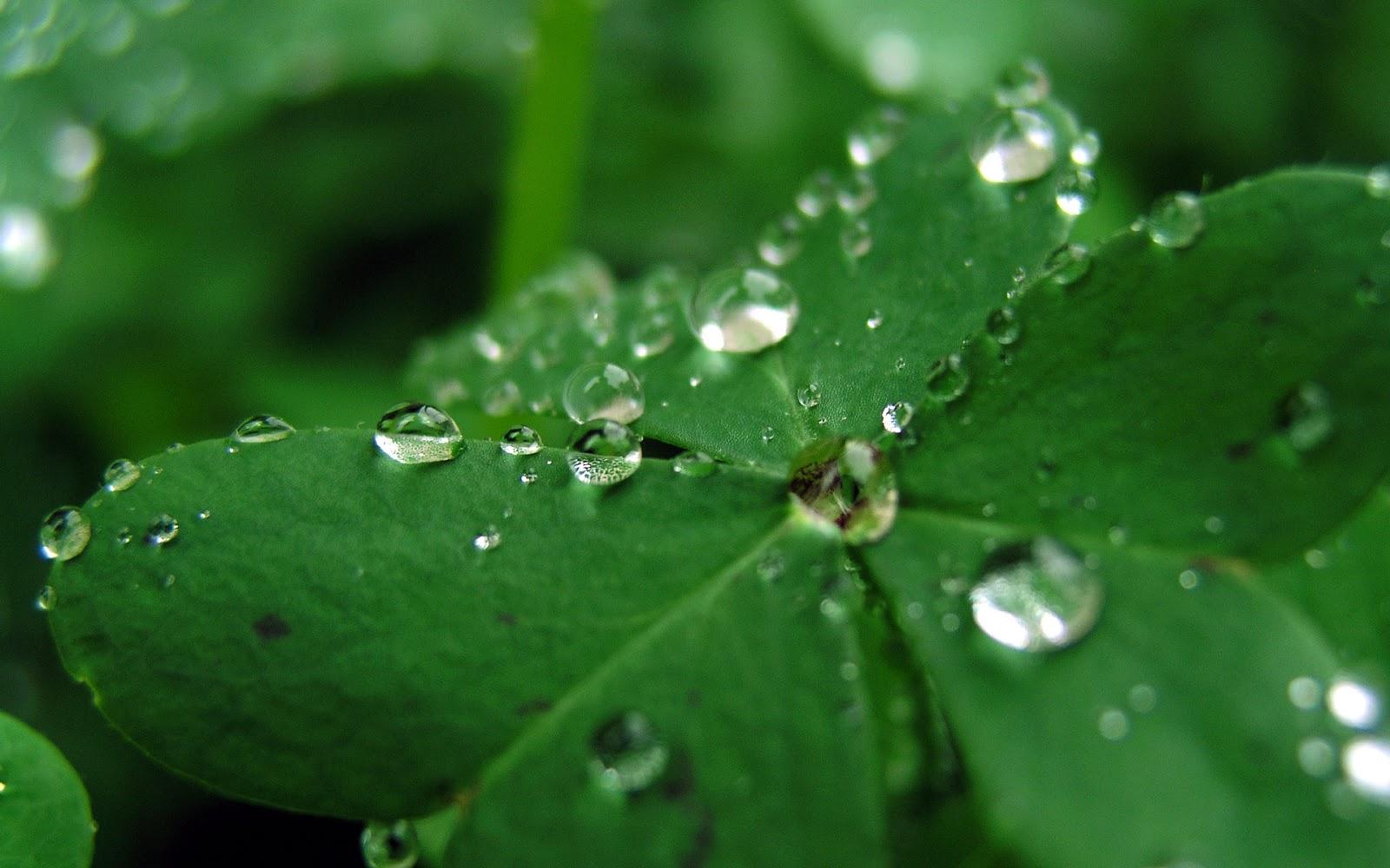 green clover wallpaper - photo #18