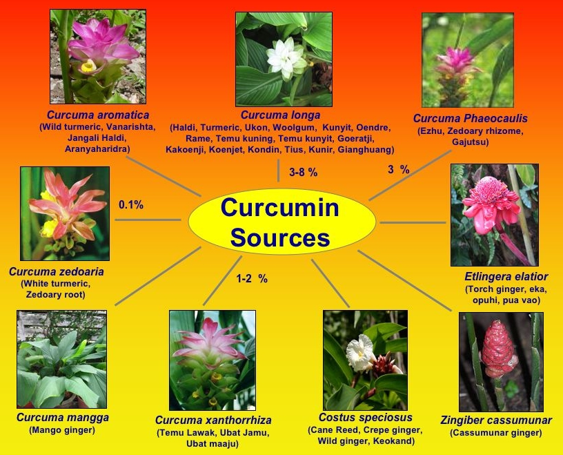 Curcumin Turmeric Extracts: What is Curcumin