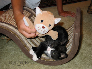 Oscar the cat with Mr. Kitty! - QuiltedJoy.com