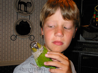 Birdman with Apollo the bird - QuiltedJoy.com