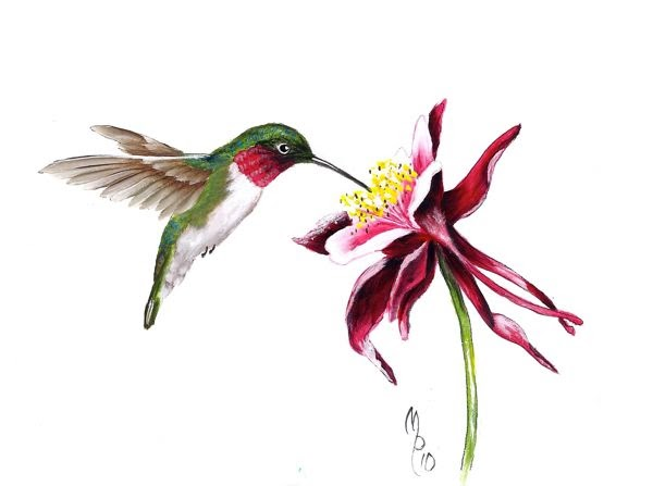 Paint Page: Hummingbird
