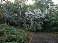tornado damage in park