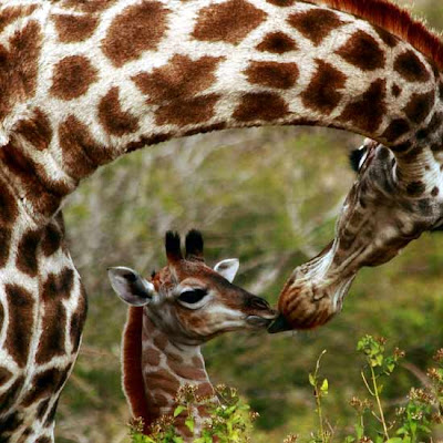 Art of Kissing || Beautiful Animals Cute Pictures