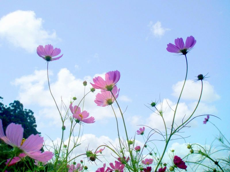 Very Cute And Beautiful Wallpapers Beautiful Flowers In Sky Background