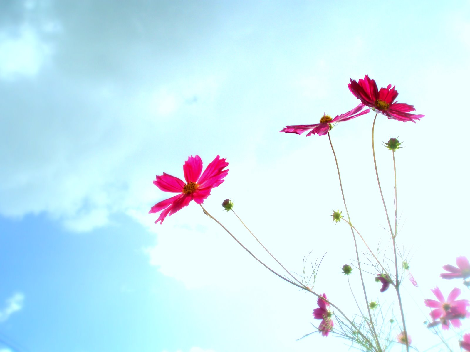 Cute Baby Girl Wallpapers With Quotes Beautiful Flowers In Sky Background