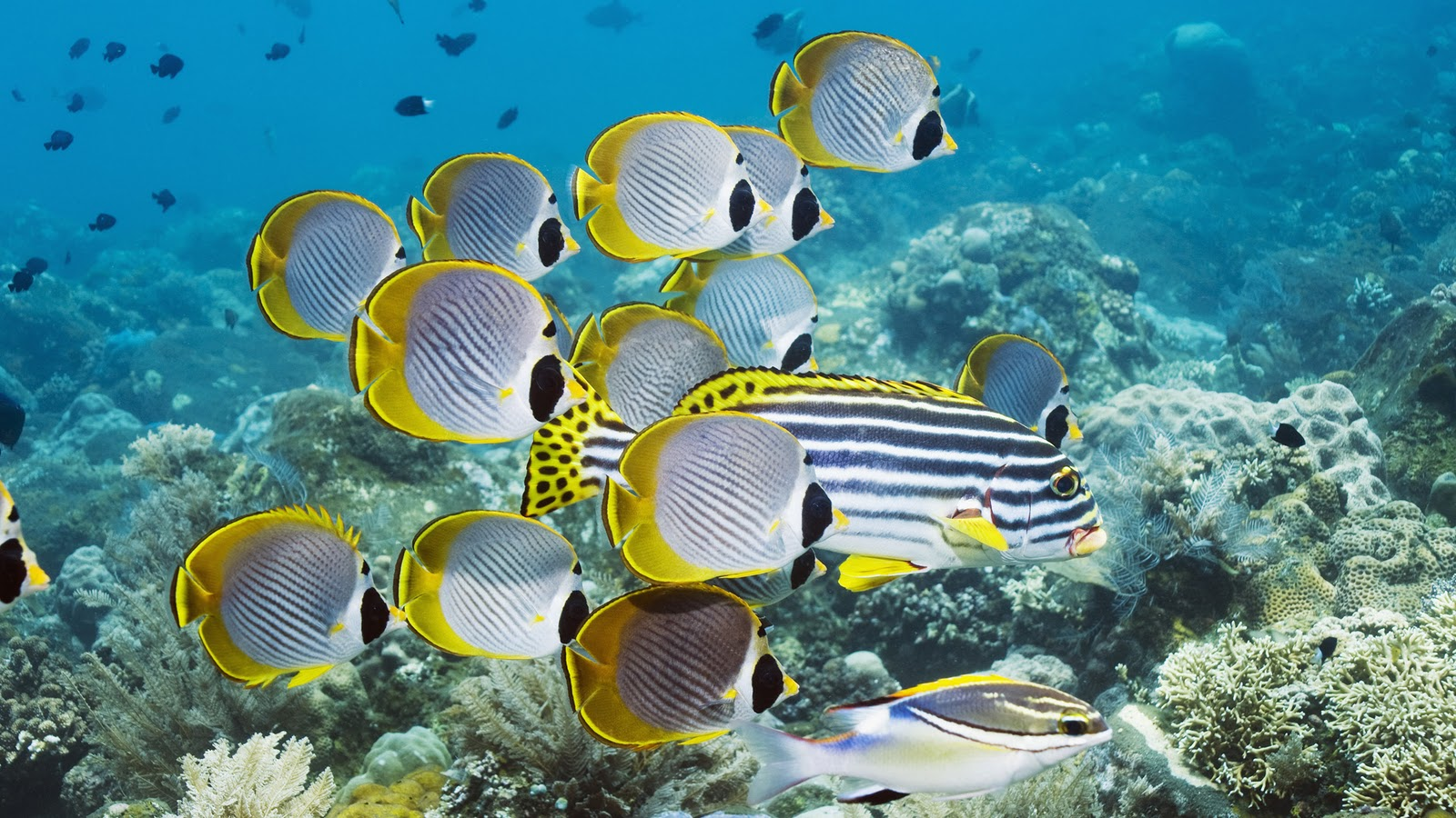 sea animals cute fish creatures wild wallpapers birds water deep creature undersea wildlife bali 1080