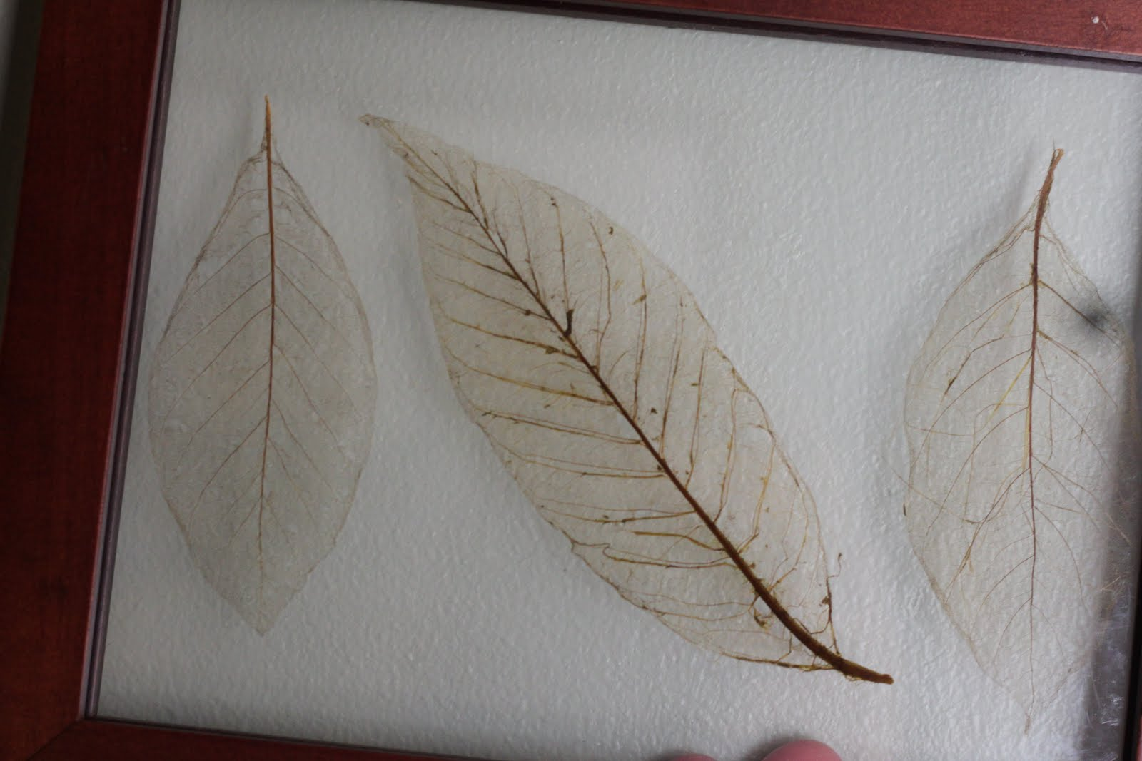How To Make Leaf Skeletons The Idea Room