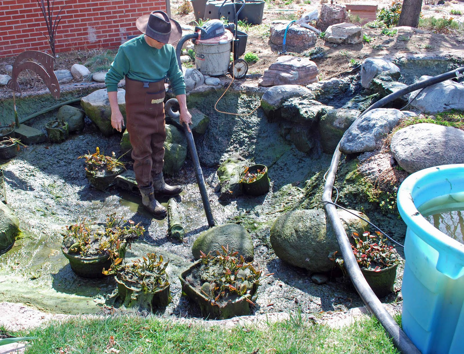 the art garden: Pond Cleaning Day