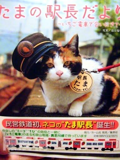 「小玉 (貓)」的圖片搜尋結果