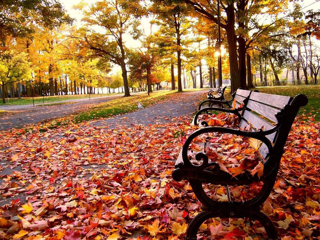 Rodolfo Pamplona Filho: Sob as folhas do outono de Nova York