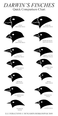 Confronting Darwin: Darwin's Famous Finches: Compared