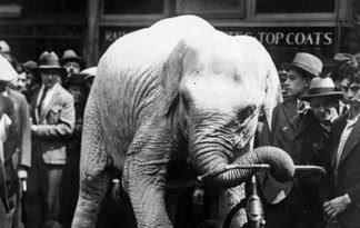 The Rag Blog Marc Estrin The Execution Of An Elephant border=
