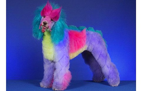 Bilinick Dogs Made To Look Like Other Things