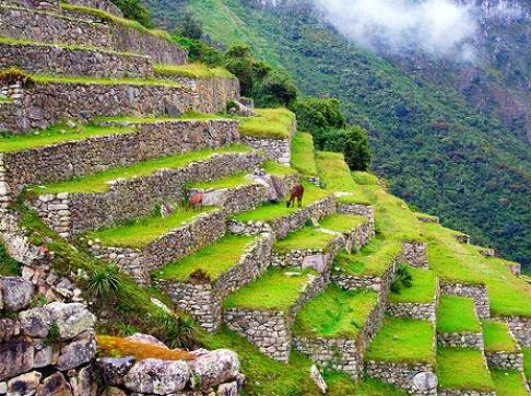 Redrímacnoticias Perú Recupera Terrazas Para Agricultura