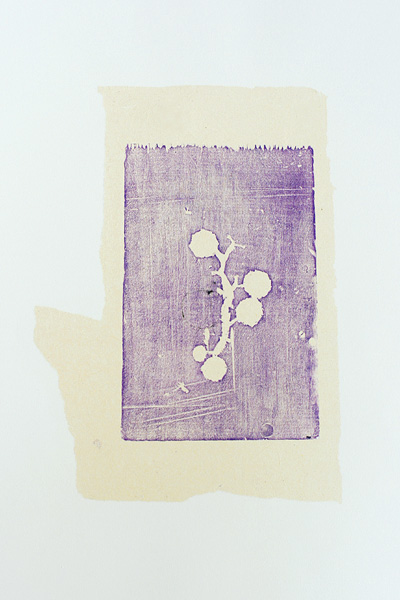Grape stem, 1997, Fruit series. watercolor monotype on Arches printmaking paper. 20.3 x 12.7 cm image on 52 x 35.6 cm paper size)