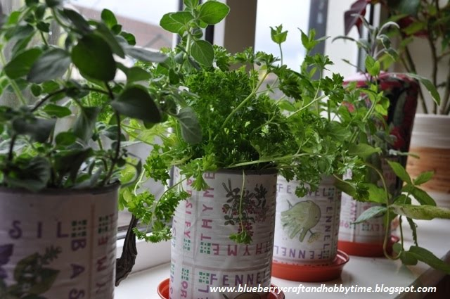 Herb Garden In Coffee Cans