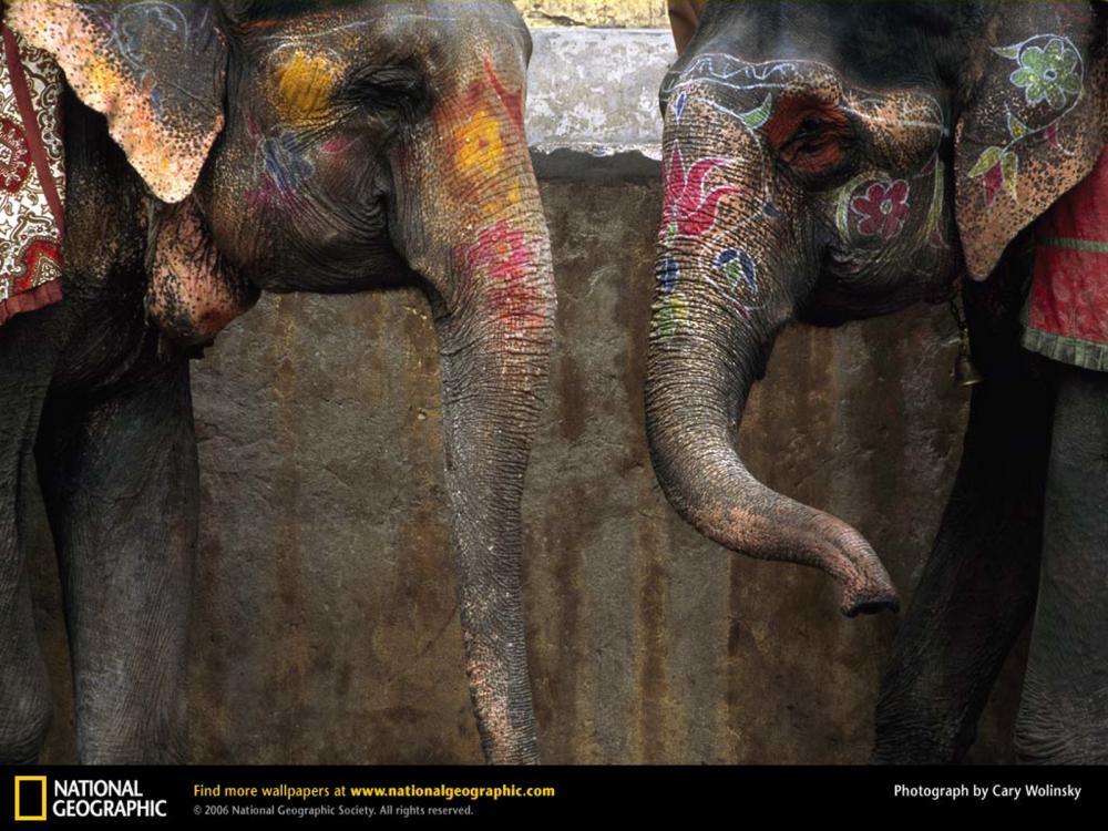 L'atelier de Mme Reddick's Workshop: Divali Elephants