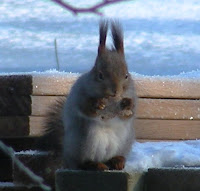 Oravan Poikaset