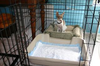 Dogmantics Dog Training Blog Making An Escape Proof X Pen