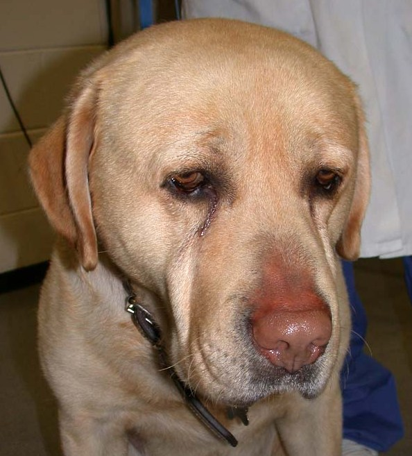 Animal Endocrine Clinic Hypothyroidism One Of The Top 10