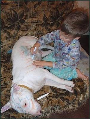 Olha filho, o cachorro voltou do psiclólogo. Pode brincar com ele agora.