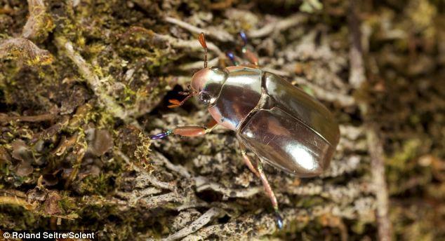 Ivanildosantos Foto Kumbang