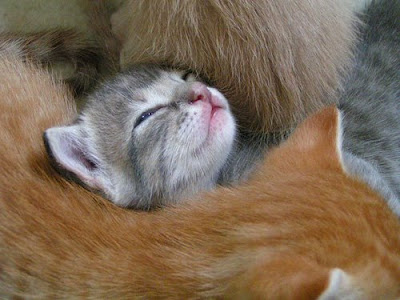 Baby cat by fofurasfelinas from flickr (CC-NC-ND)
