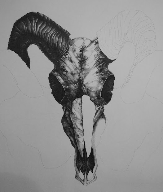 Aries Ram Skull Drawings