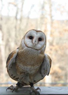 World Bird Sanctuary: Adopt A Bird spotlight: Dawn ...