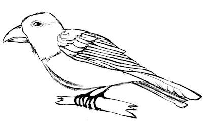 Passaro Para Colorir Desenho De Aves Para Pintar Desenhos Para