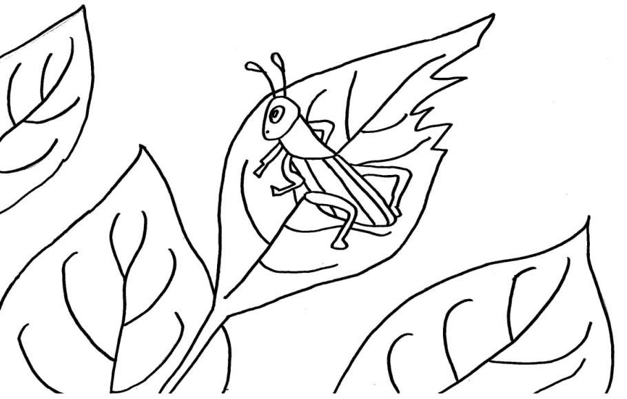 Vários Desenhos De Animais Para Colorir Insetos Gafanhoto