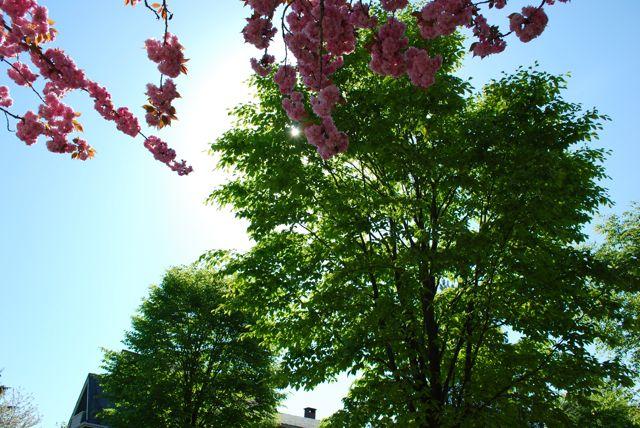 [春2009+029.jpg]
