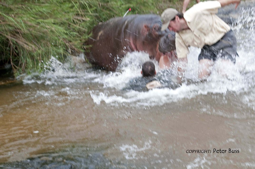 South African Jokes: [Fwd: Hippo attack photos]