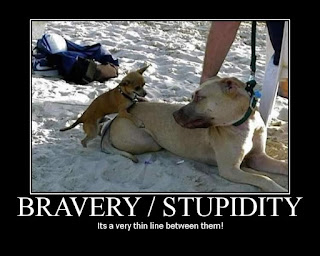 Bravery Stupidity motivational, bravery stupidity demotivational, bravery stupidity it's a very thin line between them, bravery stupidity, motivational, demotivational