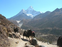 Everest Base Camp Trekkers Winston Ho and Richard Kelliher Report